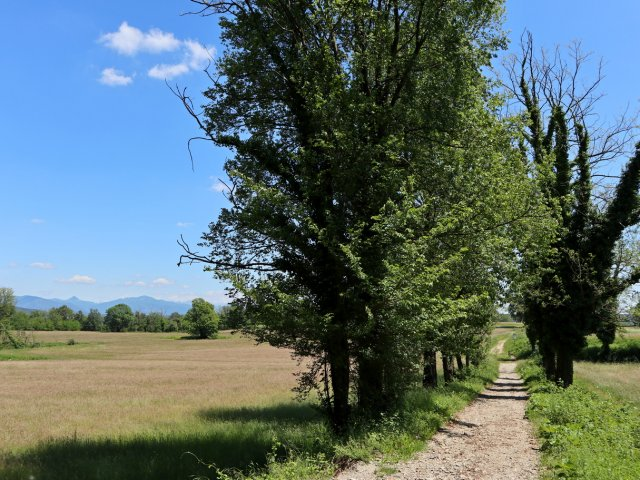 03_Castiglione_Olona_Parco_Rile_Tenore_Olona